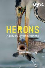 Herons Jo Allan1